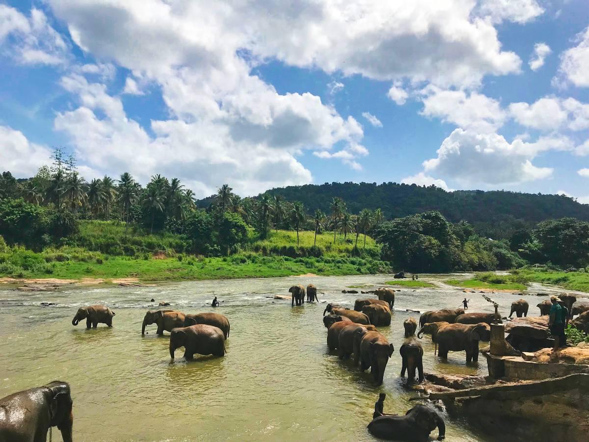 Platz 1: Sri Lanka – Öko-Tourismus, wilde Tiere und ein Mix von Religionen und Kulturen ziehen die Reisenden 2019 nach Sri Lanka. Egal ob als Familie, als Adrenalin-Junkie oder Wellness-Suchender: Sri Lanka ist laut Lonely Planet 2019 die Top-Reisedestination. (© Unsplash)