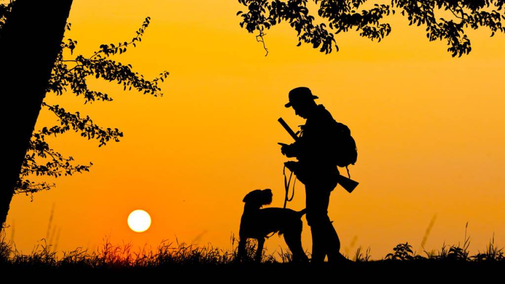 Beim Jagdgesetz mit dem erleichterten Abschuss von Wolf, Biber und Co., das am 27. September zusammen mit vier weiteren eidgenössischen Vorlagen zur Abstimmung kommt, ist die Lage offen. (Archivbild)