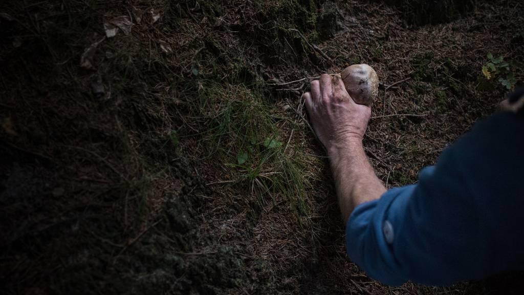 Mann stürzt beim Pilzesammeln über Böschung und stirbt