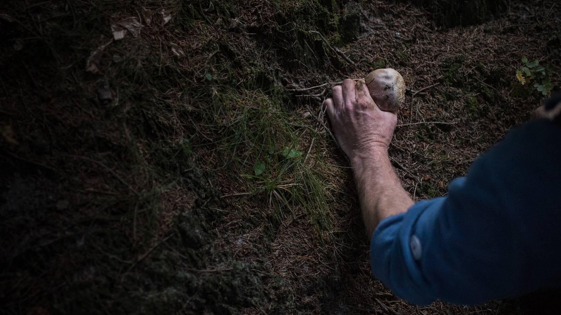 Der 81-Jährige verunfallte beim Pilzesammeln. (Symbolbild)