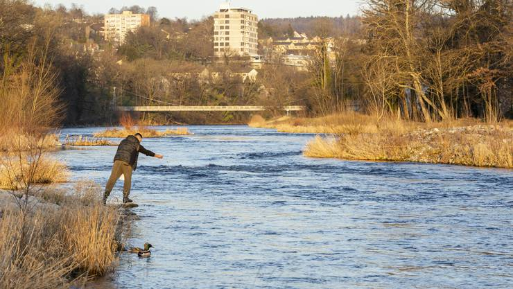 Der Fischbesatz ist eine unterstützende Massnahme. Für die Verbesserung der Bestände    ist die Aufwertung der Lebensräume, wie hier an der Grenze zur Stadt Zürich, wo die Limmat renaturiert wurde, wichtig.
