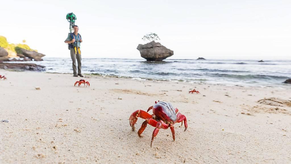 Rote Krabben am Strand der abgelegenen Weihnachtsinsel im Indischen Ozean. (Archivbild)