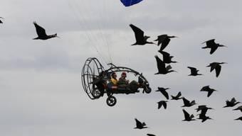 Am Bodensee erhalten junge Waldrappe Flugstunden von Menschen für ihre gemeinsame spätere Reise über die Alpen. (Symbolbild)