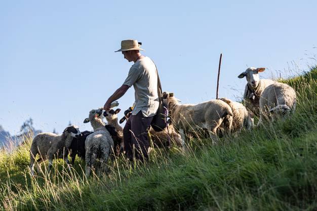 Denis Handschin hütet Schafe im bündnerischen Safiental. Bild Mathias Kunfermann