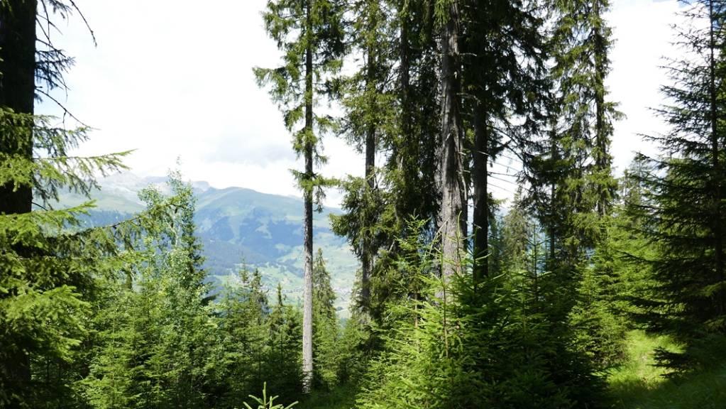 Die Bündner Wälder sollen mithilfe der neuen Strategie längerfristig ihre Schutzfunktion verbessern können.