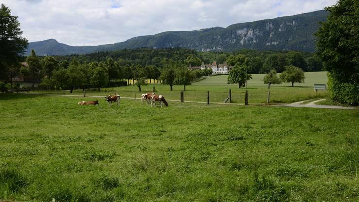 Feldbrunnen, das Dorf mit der schönen Aussicht aufs Schloss Waldegg, in dem viele kulturelle Anlässe stattfinden.