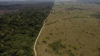 Die Abholzung des Amazonas-Regenwaldes nimmt stetig zu (Archiv)
