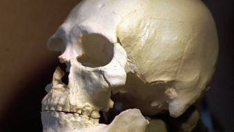 """Er ist definitiv ein nordamerikanischer Ureinwohner: Dies belegt die Erbgutanalyse des """"Kennewick Man"""". Zürcher Forscher haben Schädelmerkmale untersucht (Plastikmodell)"""