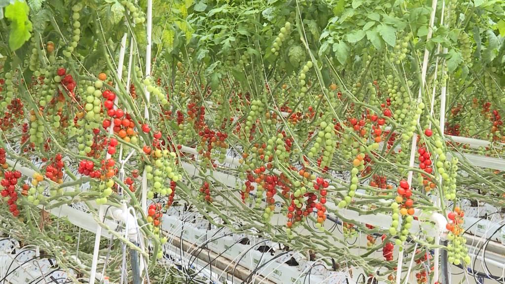 Was bringt die Zukunft für Gemüsebauern?