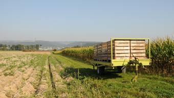 Das Döttinger Bauunternehmen Birchmeier Bau AG will Kies in der Geländekammer Hard-Härdli abbauen – heute wird hier Landwirtschaft betrieben. Archiv/pz