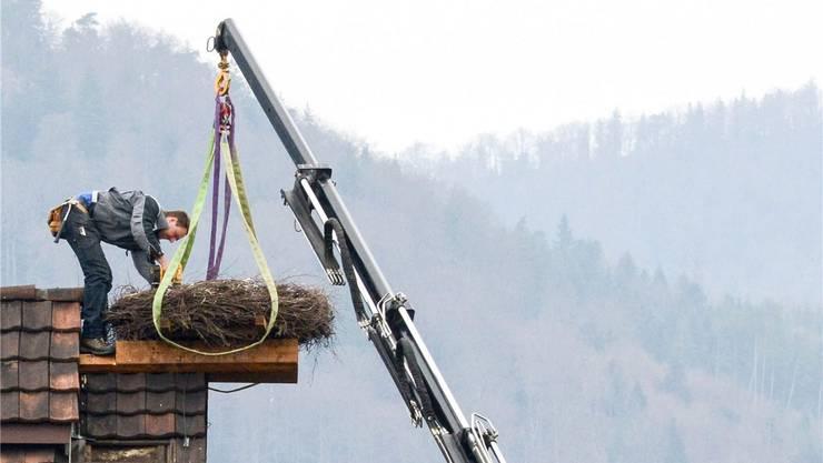 Der Storchenhorst wurde von einer spezialisierten Firma auf dem Dach in Härkingen montiert.