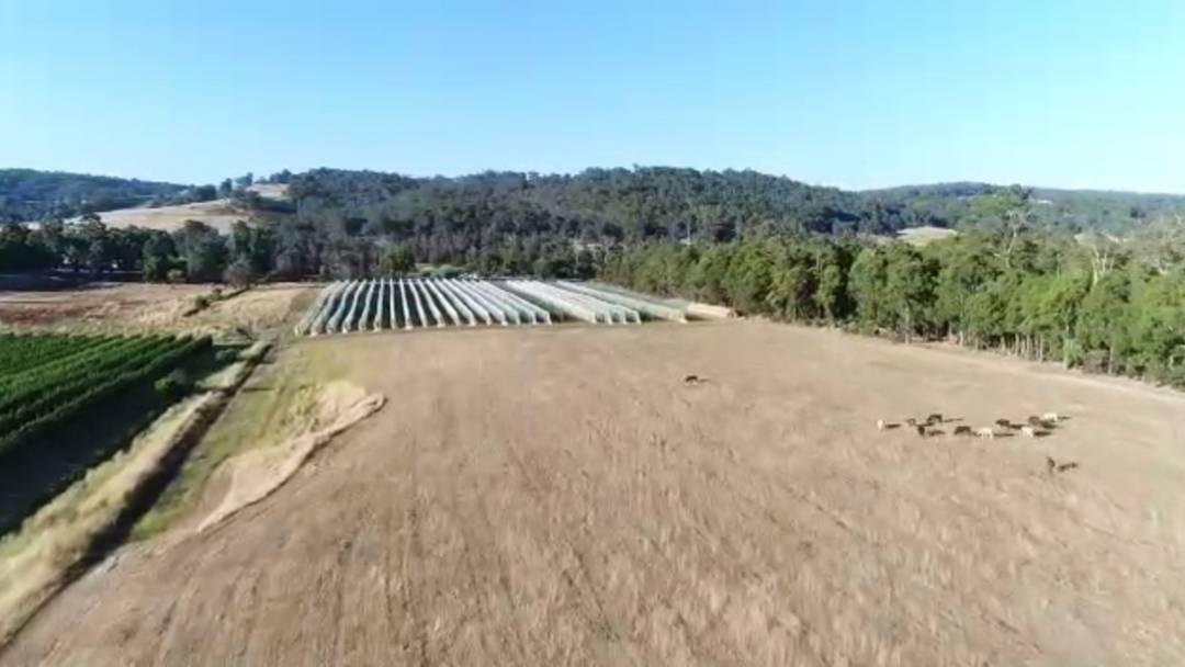 Drohnenflug über die Obstfarm der Keuschs in Donnybrook – Ueli Keusch kommentiert auf Englisch