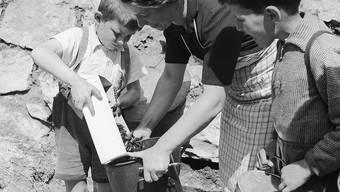 Kesselweise trugen Kinder landauf, landab die Käfer zusammen (Symbolbild aus dem Jahr 1949).