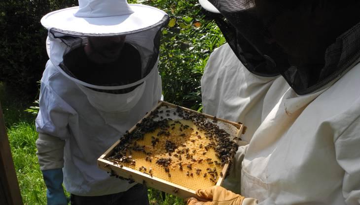 Allemann zeigt eine Wabe mit Honig und Brut.
