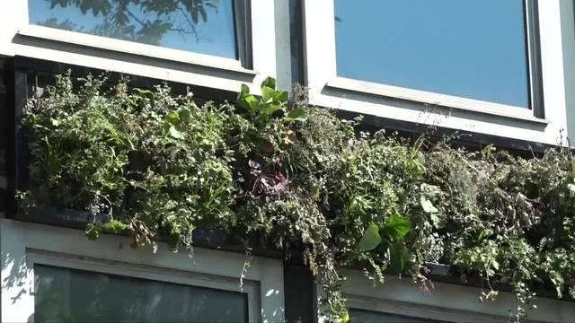 Eine «Green Wall» für Zürich?