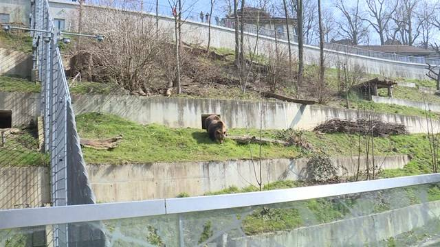 Bären wieder zurück