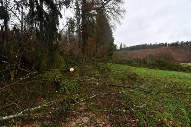 """Massive Sturmschäden am Buerweg in Obergösgen - und im Vordergrund staut sich schon das Regenwasser vom """"Tag danach""""..."""
