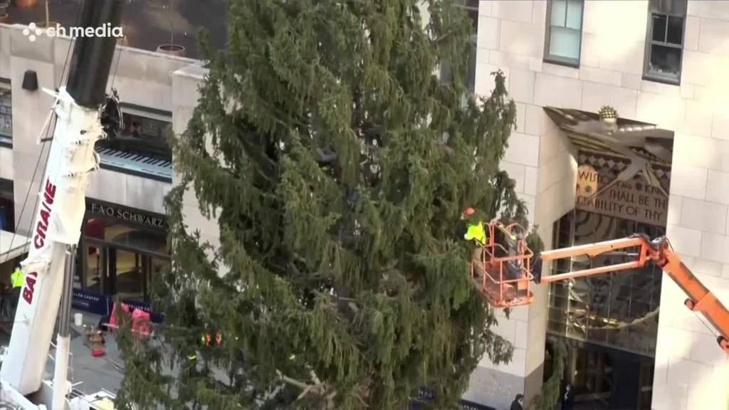 Riesen-Weihnachtsbaum in New York aufgestellt