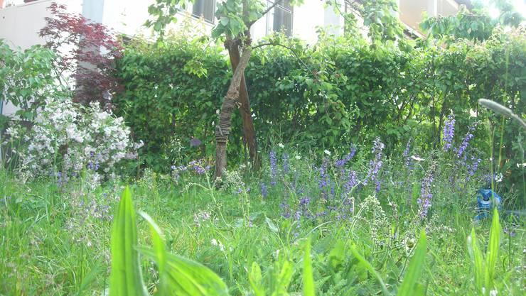 Wiesen mit blühenden Blumen sind gut für die Biodiversität.