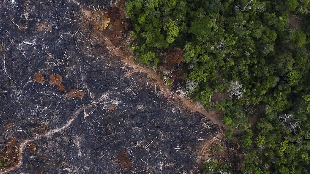 Der WWF richtet einen Appell an die Aufsichtsbehörden, das Thema Biodiversität in ihrer Tätigkeit stärker zu berücksichtigen. (Archivbild)