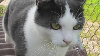 16 Katzen kamen beim Feurer ums Leben.