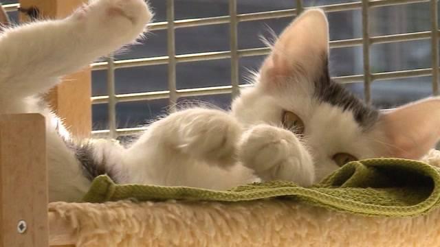 Grossrat Jenny hat neue Lösungen für die «Wildkatzen»-Frage