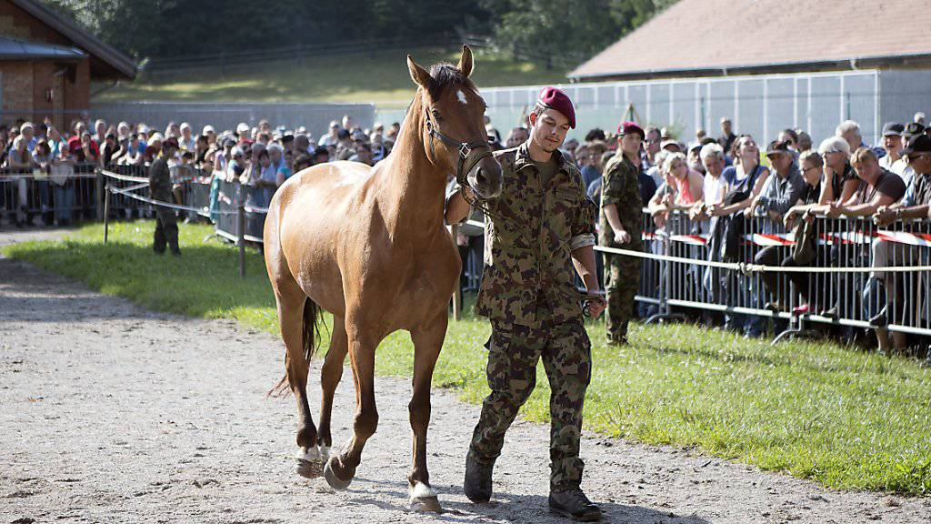 45 beschlagnahmte Pferde aus Hefenhofen TG vorerst in Graubünden