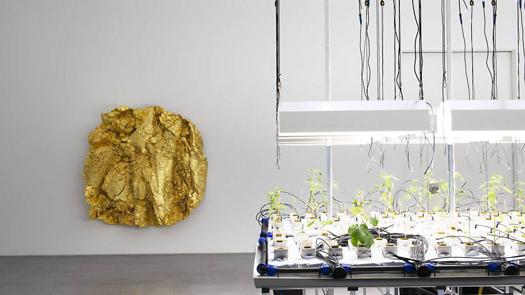 Gewächstische, auf denen Gemüse ohne Erde wächst, von Mirko Baselgia sind in der Ausstellung «LandLiebe. Kunst und Landwirtschaft» im Bündner Kunstmuseums zu sehen. Im Hintergrund hängt ein vergoldeter Abguss eines Ackers von Asta Gröting.