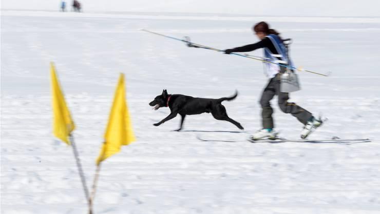 Barbara Kneubühl ist unterwegs bei der Grobsuche mit ihrem Hund «Brook».