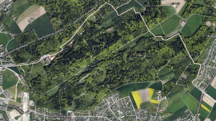 In diesem Wald in der bernischen Gemeinde Orpund fand eine Spaziergängerin die Leiche einer 66-jährigen Frau.