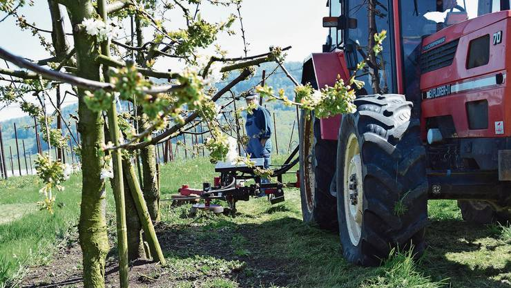 Mit einem bodenschonenden Hackgerät statt Herbiziden kann im Kirschenanbau der Humusaufbau gefördert werden
