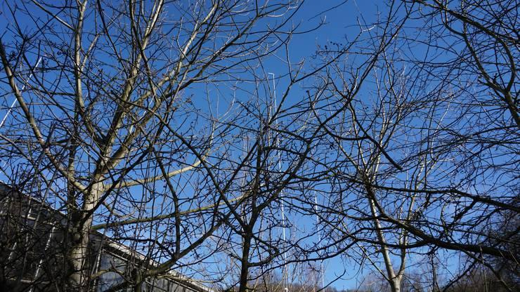 Die Bauprofile ragen über die Baumkronen hinauf.