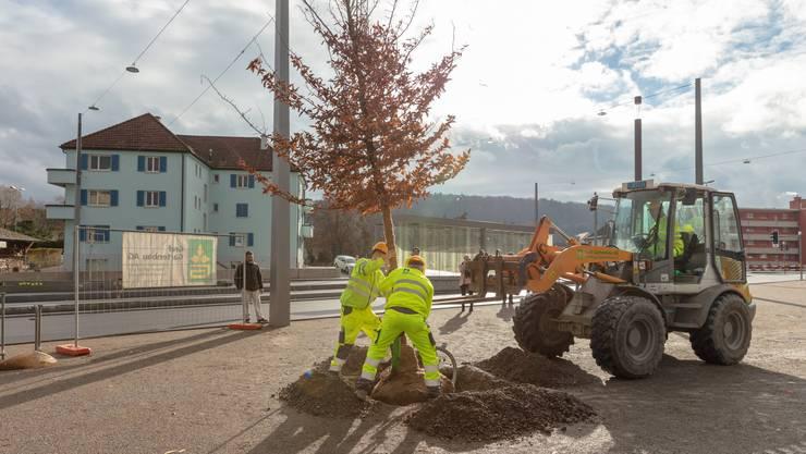 Die ersten der 72 Bäume wurden auf dem Geissweidplatz gepflanzt.
