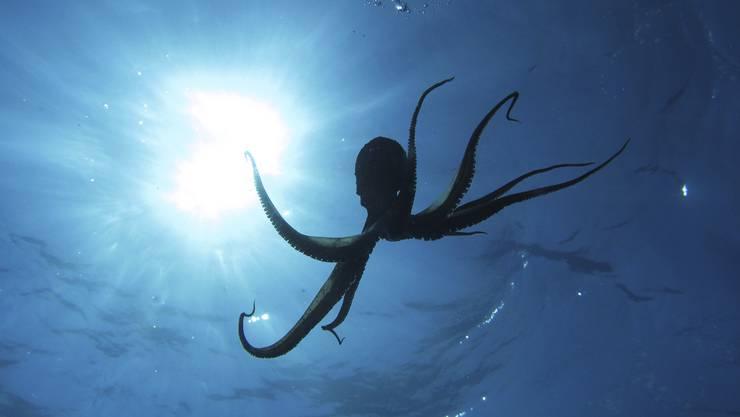 In jedem transparenten (Daten-)Ozean lauern Kraken.