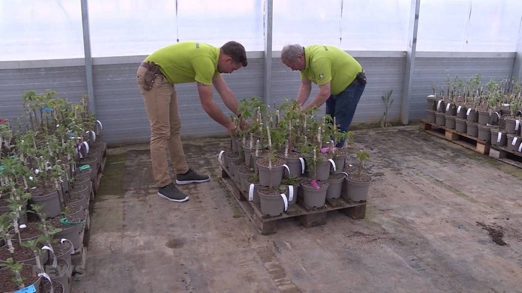 Obst vom eigenen Balkon: Klimabewegung und Corona treiben Gartenboom an