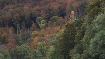 Der Aargauer Regierungsrat ist gegen eine bessere Entschädigung der gemeinwirtschaftlichen Leistungen der Waldbesitzer aus der Staatskasse.