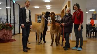 Geschäftsleiter Walter Weber (v. l.), Jolanka Schmid und Stephanie Zeier, Leiterin Aktivierung, mit den Alpakas, die auch ins Windischer Pflegezentrum hinein dürfen, um die Bewohner zu besuchen.