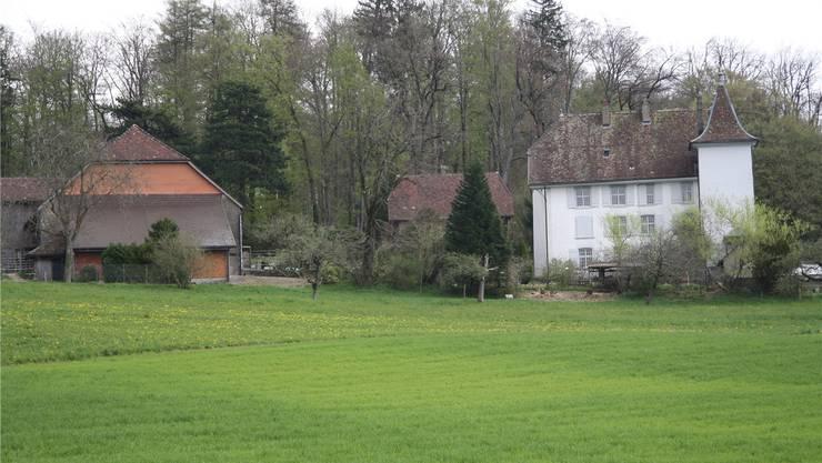 Das Waldstück oberhalb des Königshofs wäre für den Bau des Reservoirs vorgesehen – doch vor allem gegen die dafür notwendigen Rodungen wehrt sich ein Ehepaar.