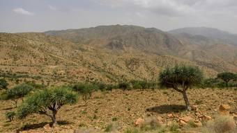 Die geografischen Bedingungen entlang des ostafrikanischen Grabens, der sich von Äthiopien nach Süden zieht, waren die Voraussetzung für die Entwicklung des Homo sapiens.