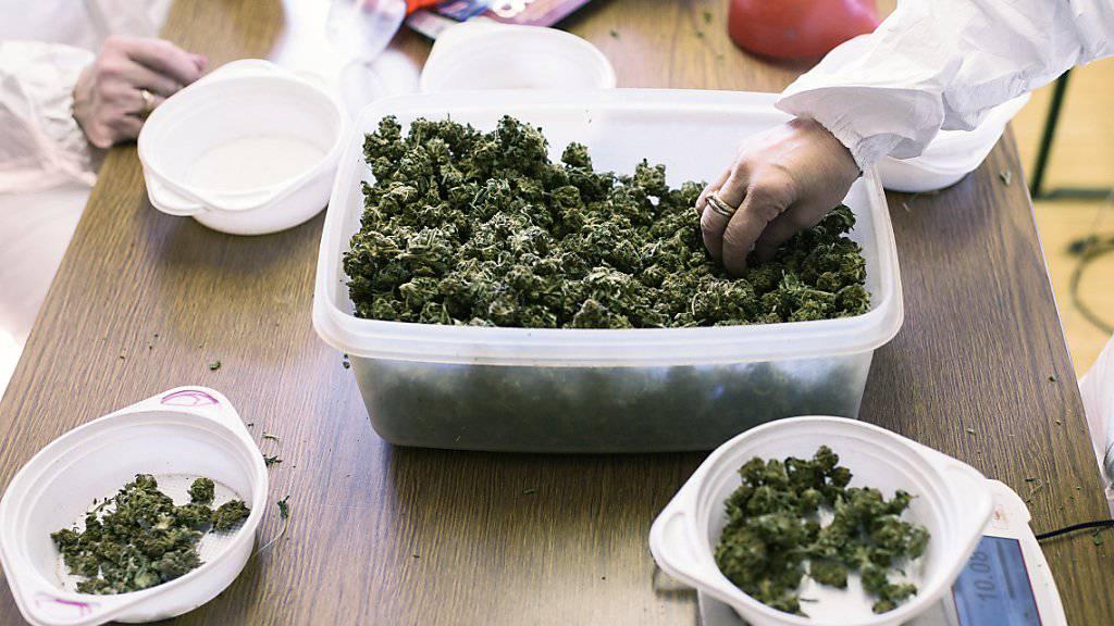 Der Nationalrat will keinen Experimentierartikel für Versuche mit Cannabis. Dieser sollte wissenschaftliche Projekte und Versuche mit neuen Regeln für den Freizeitkonsum von Cannabis ermöglichen. (Themenbild)