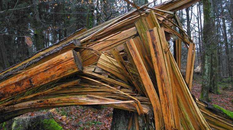 Sturmschäden im Wald zwischen Nennigkofen und Lüterkofen