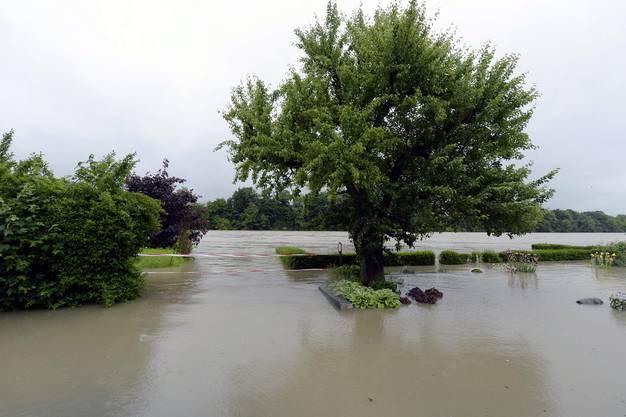 Hochwasser am Rhein bei Mumpf AG