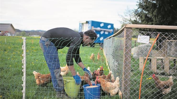 Basisausbildungen für Flüchtlinge – etwa in der Landwirtschaft – zeigen Wirkung. Gian Ehrenzeller/Keystone