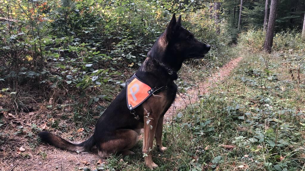 Polizeihund spürt Dieb auf Friedhof auf