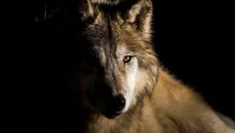 Es sind vor allem die städtischen Gebiete im Unterland, die nichts wissen wollten vom neuen Umgang mit dem Wolf.
