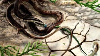 Die vierbeinige Schlange aus der Kreidezeit bei ihrer letzten Mahlzeit. (Illustration)