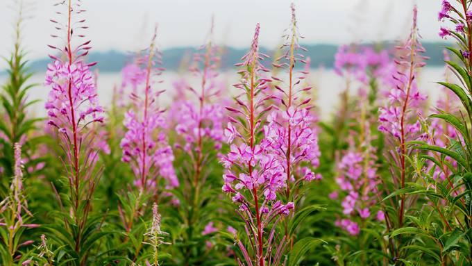 Pflanzen sind unsere Lebensgrundlage!