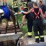 Am Dienstagabend ist in Selzach die Kuh Ariane in ein Güllenloch gefallen. Glücklicherweise war die Feuerwehr schnell zur Stelle. Mit der Hilfe eines Krans konnten die Einsatzkräfte das Tier aus der misslichen Lage befreien.