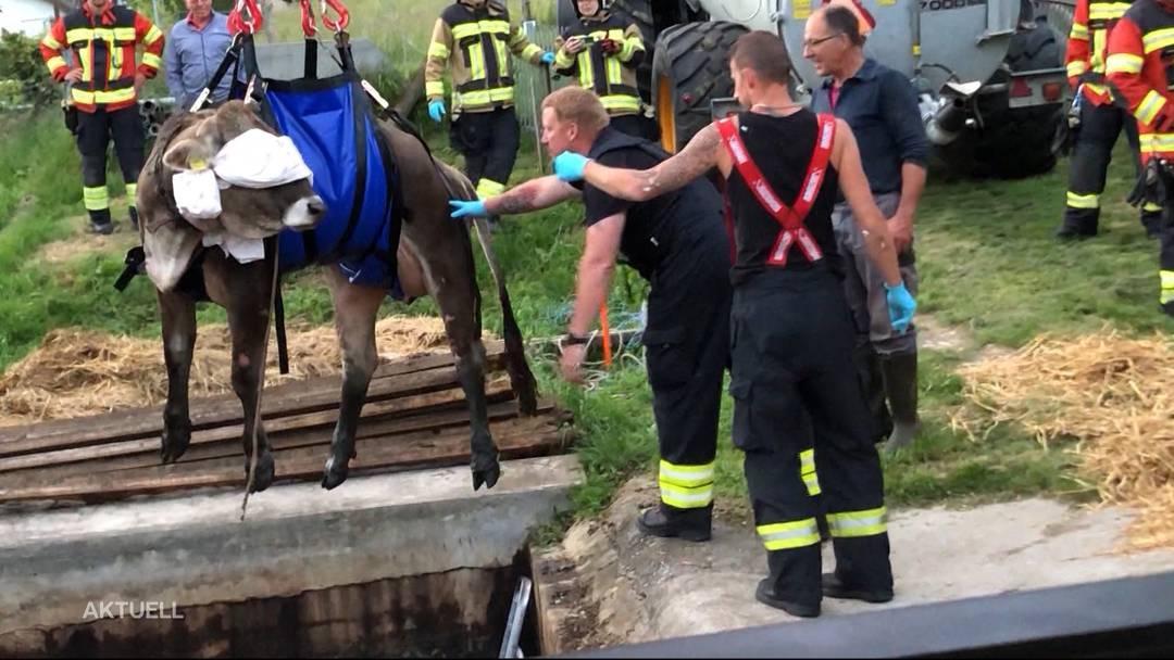 Selzach: Feuerwehr rettet Kuh aus Güllenloch