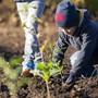 Drei Schulklassen helfen mit, 750 Eichen und 60 Eiben zu pflanzen, im Wald bei Oberrohrdorf am 16. Oktober 2019.